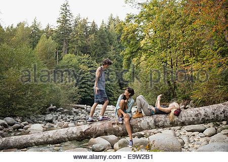 Friends relaxing on fallen tree in woods - Stock Photo