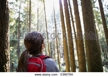 Girl looking up at tall trees in woods - Stock Photo