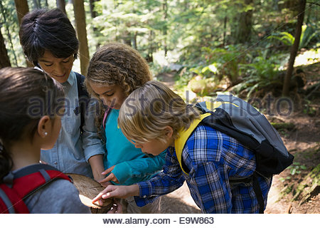 Teacher and students examining tree ring in woods - Stock Photo