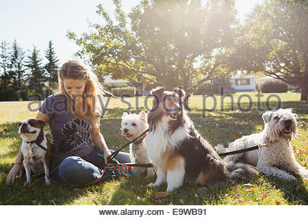 Dog walker sitting with dogs in sunny park - Stock Photo