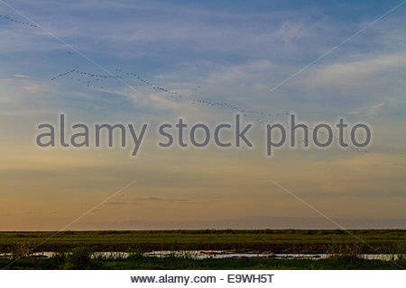 Birds flying in formation in sky - East Africa - Tanzania - Stock Photo