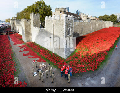 UK, England, London. Volunteers  create a sea of ceramic poppies at the Tower of London to commemorate the centenary - Stock Photo