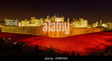 Tower of London poppies at night - Stock Photo