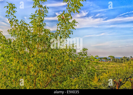 Flowers, green weeds, leaves, plants and trees on vineyards backgrounds on cultivated hills in Italian countryside - Stock Photo