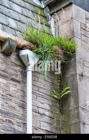 Blocked gutters and downpipes in an abandoned Victorian building, UK - Stock Photo