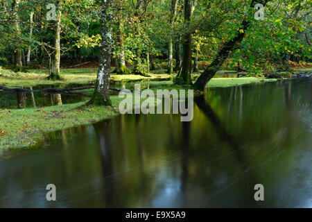 Flooded deciduous woodland at Ober Water. New Forest National Park. Hampshire, UK. - Stock Photo