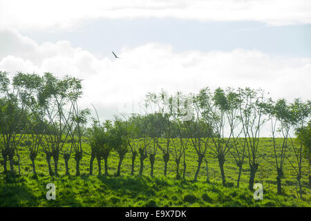 Dominikanische Republik, Osten, Landschaft beim Dorf Las Guyamas - Stock Photo