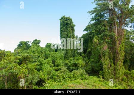 Dominikanische Republik, Osten, Landschaft beim Dorf El Cedro, - Stock Photo