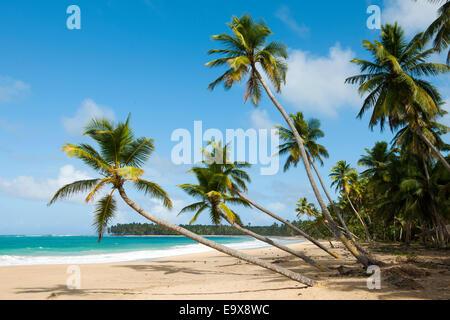 Dominikanische Republik, Osten, El Cedro, Strand Playa Limon - Stock Photo