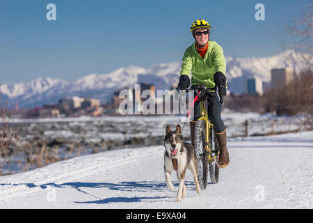 Woman riding bike with sled dog on Tony Knowles Coastal Trail with downtown Anchorage in the background, Winter - Stock Photo