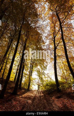 Mysterious dark autumn forest landscape. - Stock Photo