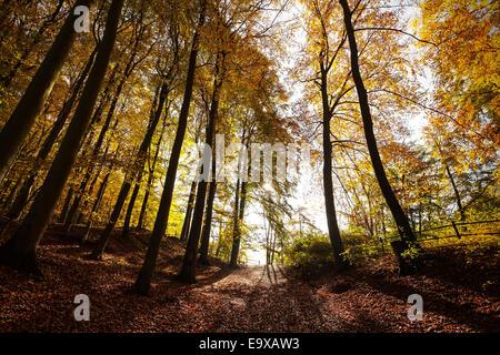 Mysterious autumn forest landscape. - Stock Photo