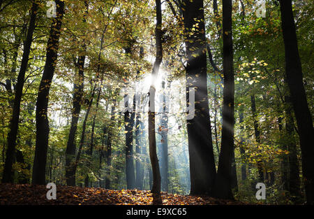 Mysterious dark autumn forest landscape with sunbeams. - Stock Photo