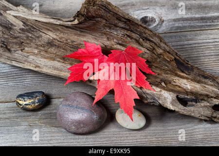Vibrant red maple leaves in autumn color on aged driftwood - Stock Photo