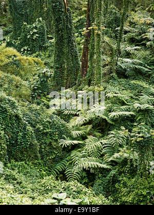 Vegetation, Akaka Falls State Park, Big Island, Hawaii, United States - Stock Photo