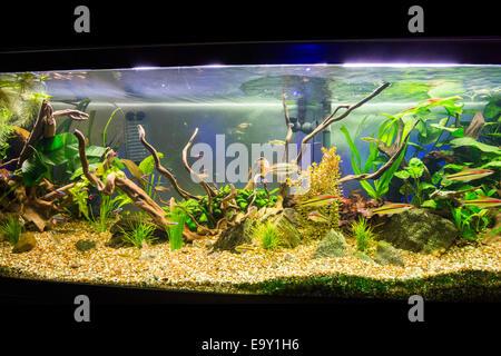 A beautiful planted tropical freshwater aquarium. - Stock Photo