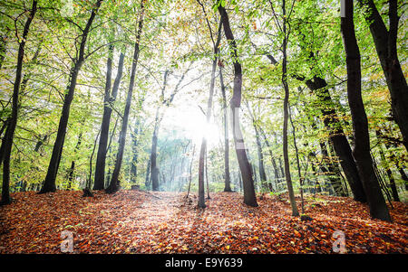 Mysterious autumn forest landscape with sunbeams. - Stock Photo