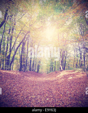 Retro filtered picture of a an autumnal forest. - Stock Photo
