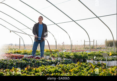 Male horticulturalist watering plants in plant nursery polytunnel - Stock Photo