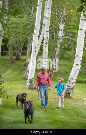Father and son out walking two dogs - Stock Photo