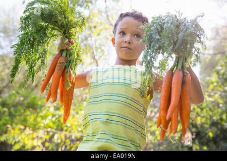 Portrait of boy in garden holding up bunches of carrots - Stock Photo