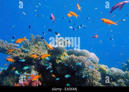 Sea life around Coral reef - Stock Photo