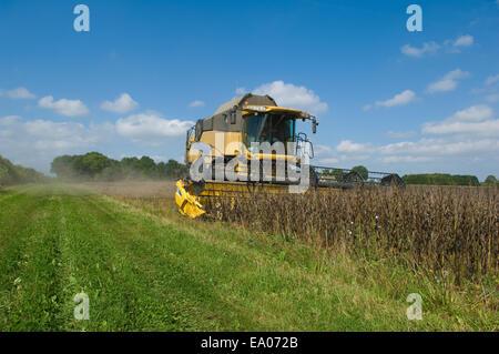 Farmer driving combine harvester in field - Stock Photo