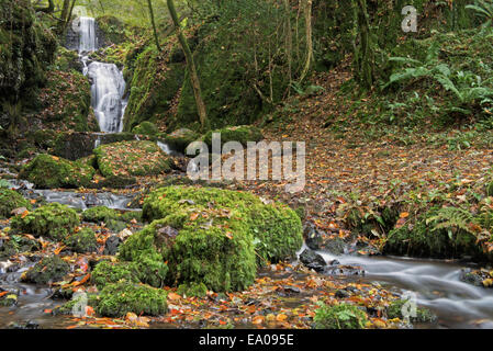 Clampitt Falls part of the Canonteign Falls Waterfall system in autumn near Chudleigh, Dartmoor National Park,  - Stock Photo