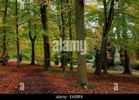 Batsford Arboretum, near Moreton-in-the-Marsh, Gloucestershire, England UK - Stock Photo