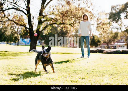 Man playing ball with dog in park - Stock Photo
