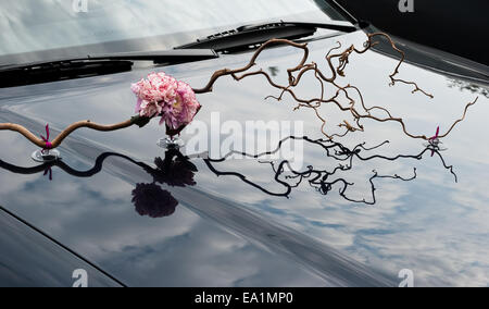 Wedding floral decoration on the hood of a car. Unusual decor on a auto bonnet. Sprig of hazelnut and pink carnation - Stock Photo