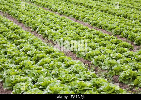 Salad box - Stock Photo
