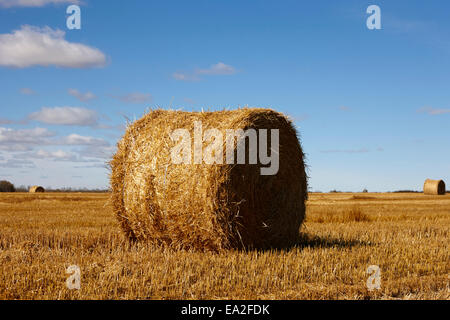 rolled hay bales on the prairies after harvest Saskatchewan Canada - Stock Photo