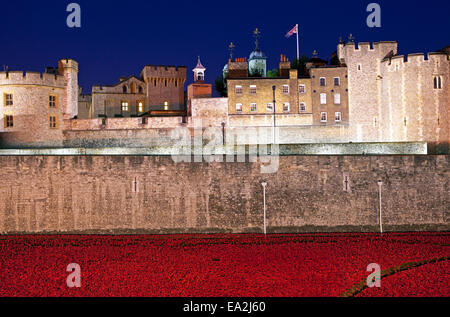 A dusk-time view of the ceramic Poppies of the 'Blood Swept Lands and Seas of Red' installation at the Tower of - Stock Photo