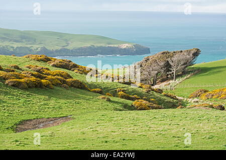 Otago Peninsula landscape, Otago, South Island, New Zealand, Pacific - Stock Photo