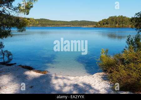 McKenzie Lake, Fraser Island, UNESCO World Heritage Site, Queensland, Australia, Pacific - Stock Photo