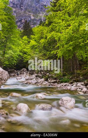Bohinj River in the Bohinj Basin, Triglav National Park, Julian Alps, Slovenia, Europe - Stock Photo