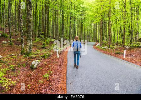 Lake Bohinj, tourist walking in a pine forest, Triglav National Park, Julian Alps, Slovenia, Europe - Stock Photo