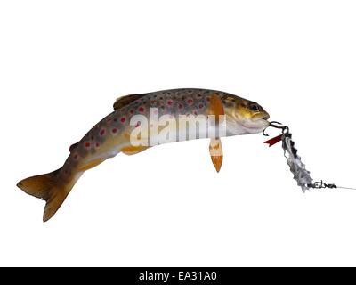 fresh stream trout with bait on white background - Stock Photo