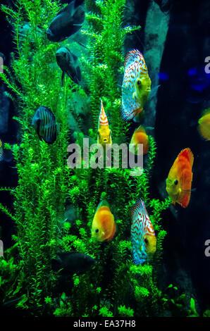 Swimming Salt Water Fish In South Carolina Aquarium Stock