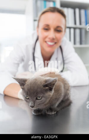 Kitten being examined by vet - Stock Photo