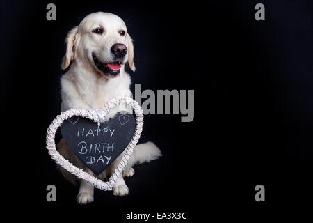 Golden Retriever Wishes Happy Birthday Stock Photo 278819600 Alamy