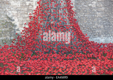 Tower of London, UK. 6th November 2014. Art installation Blood Swept Lands and Seas of Red at the Tower of London, - Stock Photo