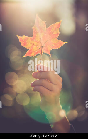 Hand of boy holding autumn leaf at backlight - Stock Photo