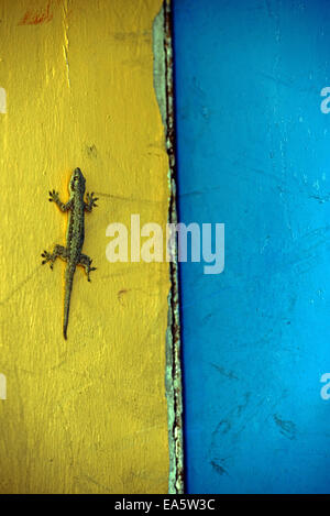 Gecko sitting on a  two-tone facade - Stock Photo