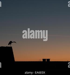 Germany, North Rhine-Westphalia, Dusseldorf, Bird at sunset - Stock Photo