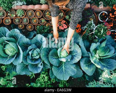 USA, California, Santa Clara County, Woman working in vegetable garden - Stock Photo