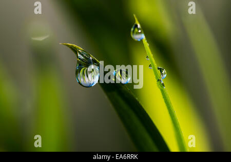 Dew hangs from the leaves; Astoria, Oregon, United States of America - Stock Photo