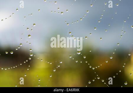 A spider's web catches rain drops; Astoria, Oregon, United States of America - Stock Photo