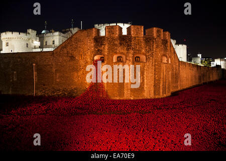 Blood Swept Lands and Seas of Red: the art installation at the Tower of London - a floodlit sea of red ceramic poppies, - Stock Photo